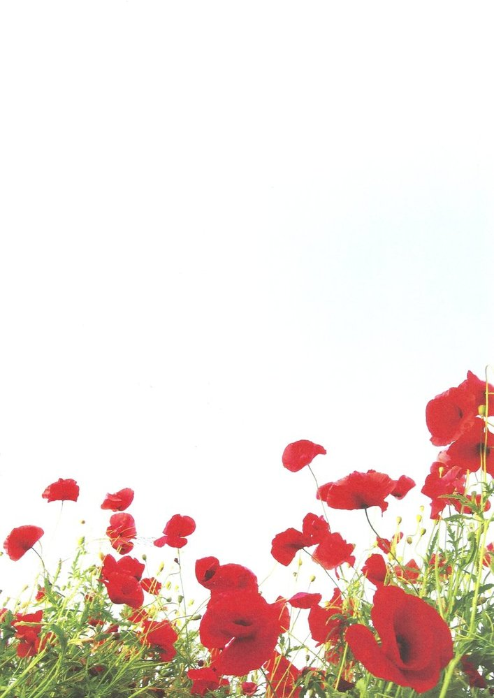 graphic regarding Poppies Printable known as Letter Paper Poppies Drucksachenversand
