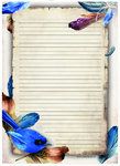 Letter Pad Feathers Meerleuks A4 50 papers